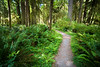 Quinault, Rainforest - Path through green rainforest