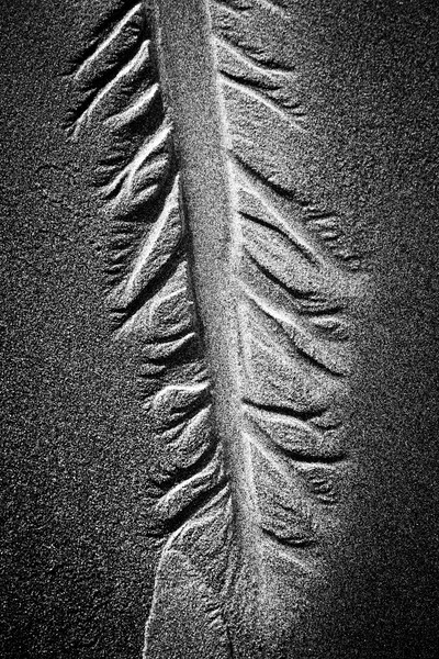Kalaloch, Ruby Beach - Tree like pattern in sand, black and white