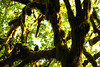Quinault, Rainforest - Dark branches, moss, and leaves