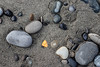 Sequim, Dungeness Spit - One colored rock in a mix of gray ones