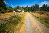 Quinault, Rainforest - Road into Kestner Homestead