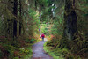 Hoh, Rainforest - Hiker with red coat on trail looking up at large trees