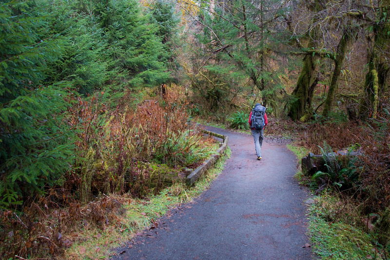 Hoh, Rainforest - Hiker with backpack walking around bend in trail