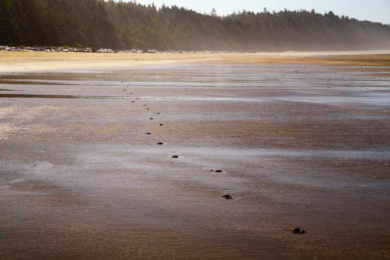 Olympic NP, Ozette Coast - Deer tracks in the sand