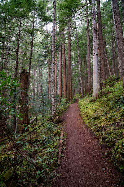 Quilcene, Mt. Townsend - Trail through the forest with fog
