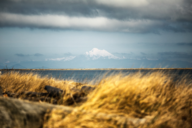Sequim, Dungeness Spit - Wind in the grass with Mt. Baker in the distance