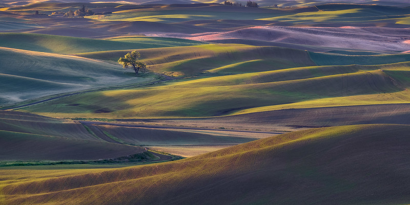 Rolling Hills in Morning Sun