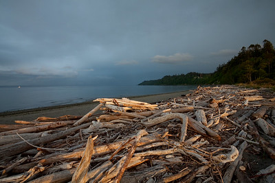 Logs washed on beach near Point No Point lighthouse
