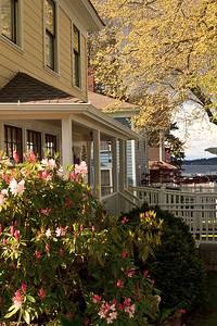 Colorful rhododendrons enhance the beauty of Port Gamble's historic houses in springtime