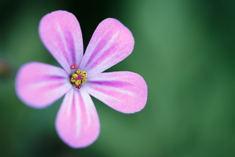 Bothell, Blyth - Close up of a pink flower