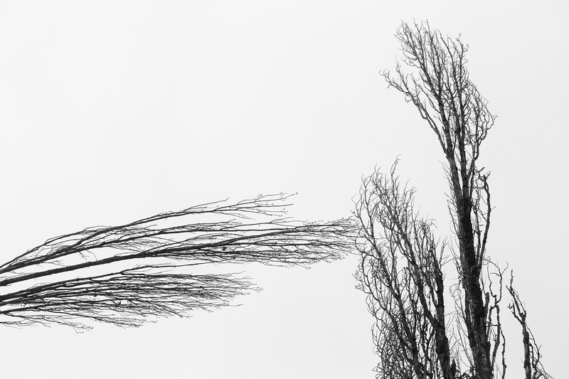 Kirkland, Juanita Bay - Two leafless trees appear to intersect in the sky at an unusual angle
