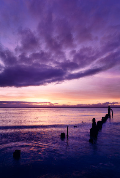 Lynnwood, Picnic Point - Old dock pilings with pink and purple sunset