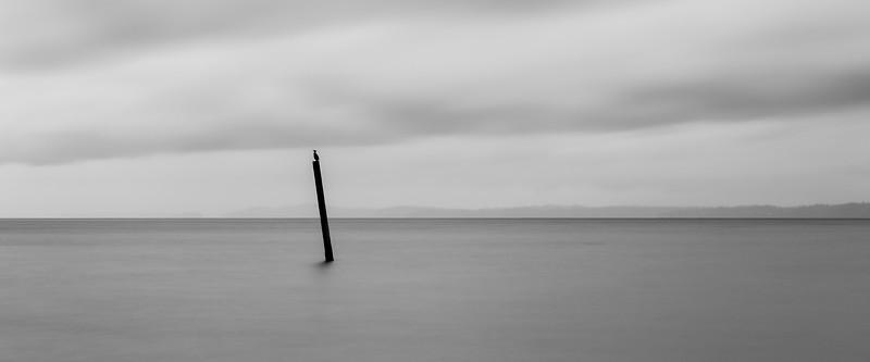 Edmonds, Marina Beach Park - Bird on a post in the sea, long exposure, black and white