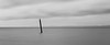 Edmonds, Marina Beach Park - Bird on a post in the sea, long exposure, black and white