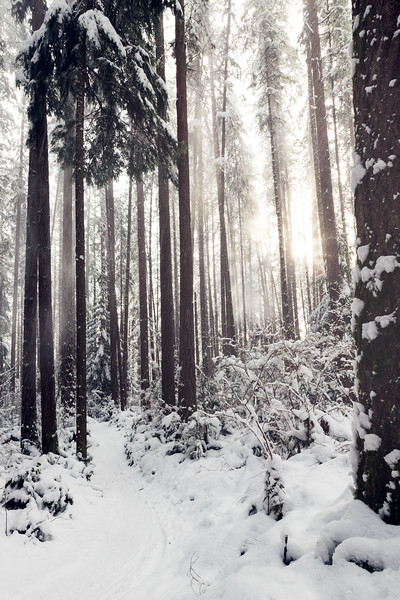 Woodinville, Paradise Valley - Forest trail in the snow with sun and mist