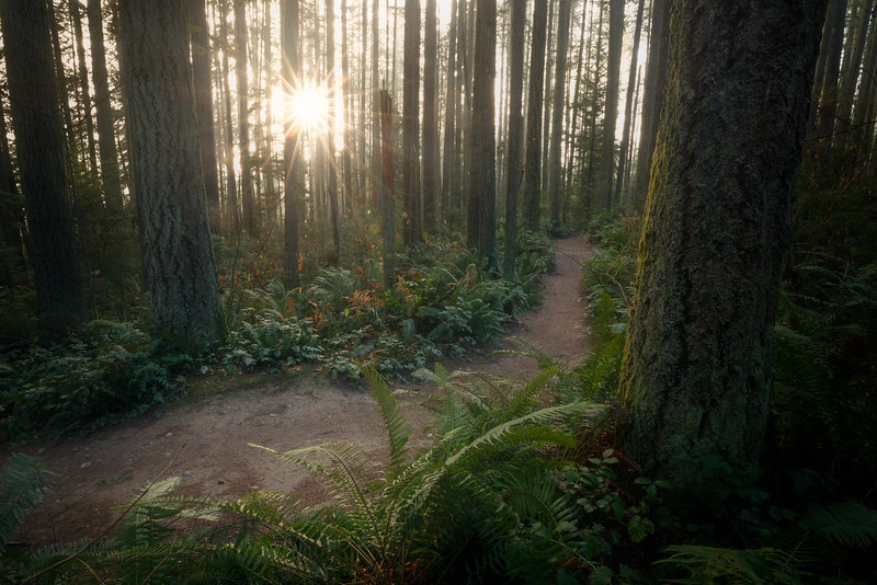 Woodinville, Paradise Valley - Trail through old growth with rising sun and mist
