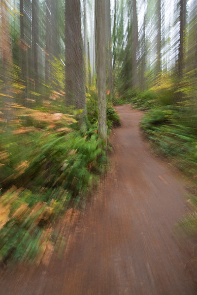Woodinville, Paradise Valley - Zoom in effect on a trail
