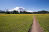 Rainier, Grand Park - Field of yellow flowers with trail
