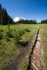 Rainier, Grand Park - Trail entering upper meadow