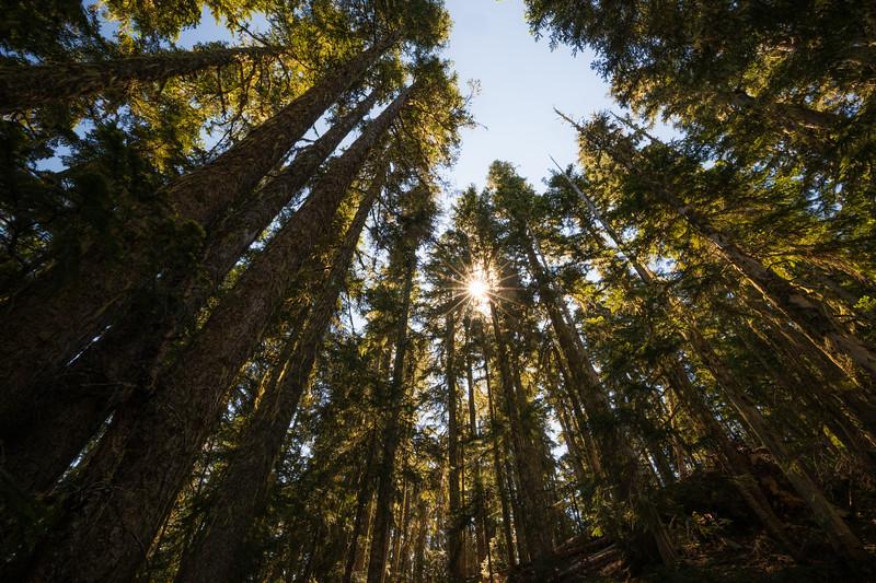 Rainier, Grand Park - Sunstar and tall trees above Lake Eleanor