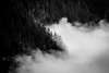 Rainier, Ipsut Pass - Telephoto view of clouds and trees from above, black and white