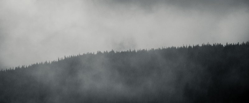 Rainier, Paradise - Ridgeline with trees in heavy clouds, black and white