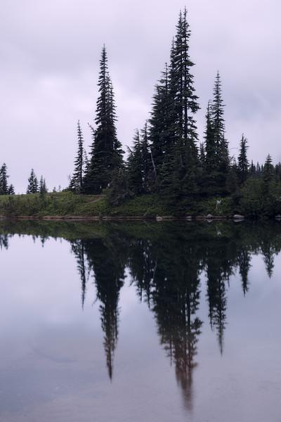 Rainier, Sunrise - Pre-dawn reflection of trees in Tipsoo Lake