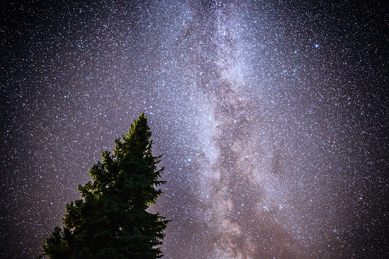 Rainier, Paradise - Milky Way arch and a single tree backlit by nearby visitor center