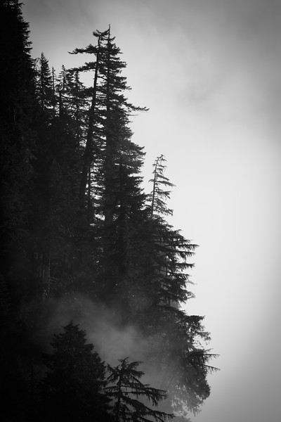 Rainier, Ipsut Pass - Telephoto view of trees on edge of cliff in the fog, black and white