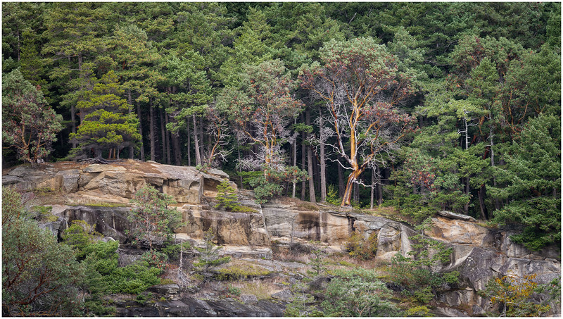 Forest on the Cliff