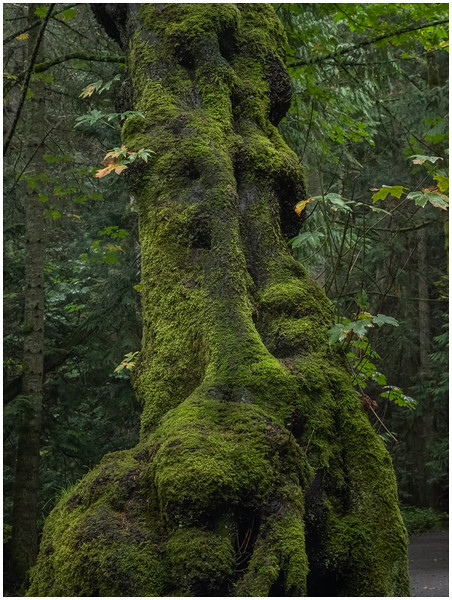 Tree Trunk Covered by Moss
