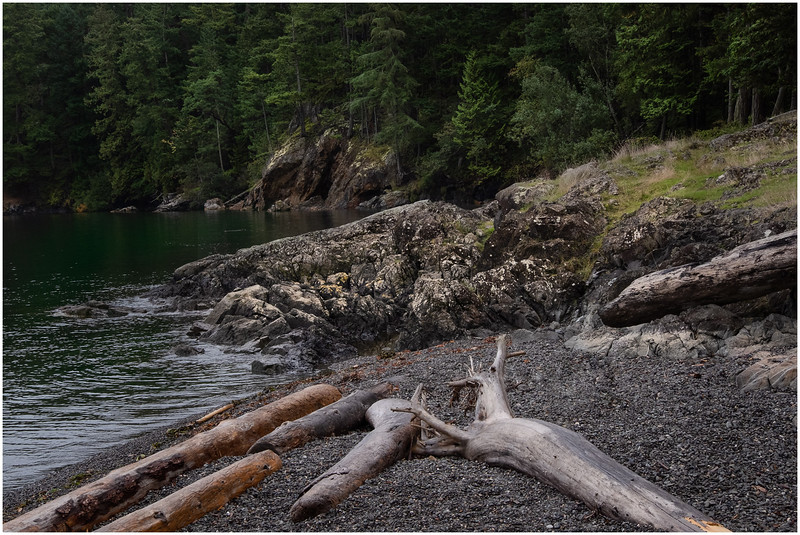 Rocky Shore and Logs