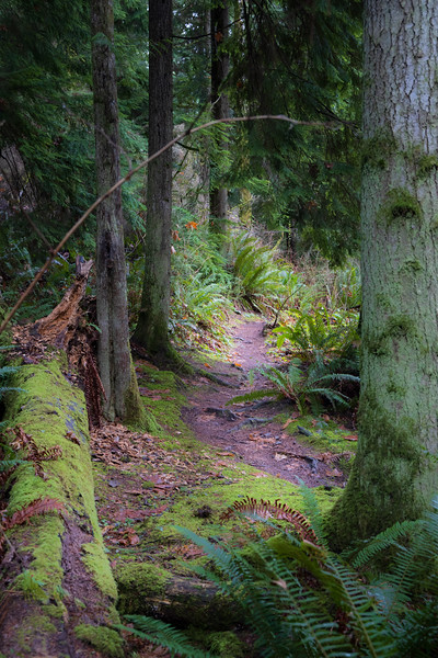 Snohomish, Lord Hill - Path leading through the forest framed by several large trees
