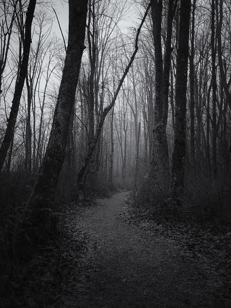 Monroe, Al Borlin - Foggy path through the forest on a cold winter day