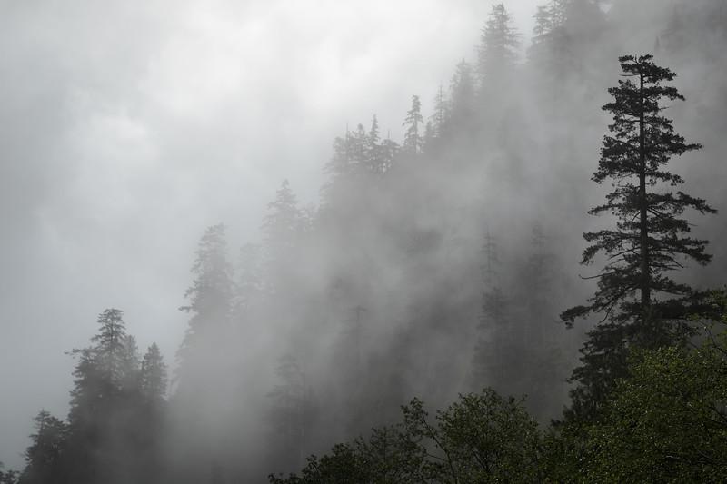 Index, Lake Serene - Foggy forest in the clouds near Lake Serene
