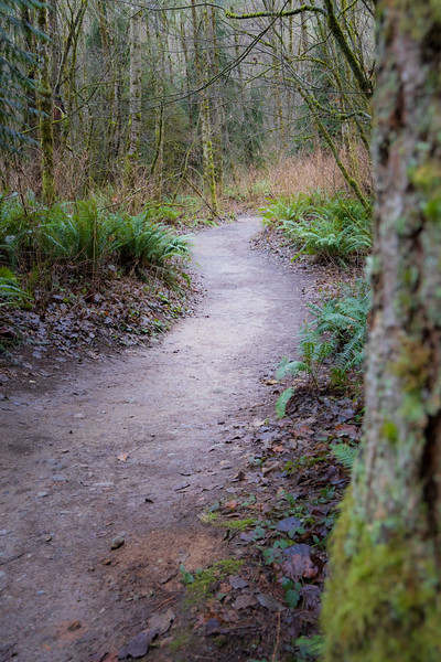 Snohomish, Lord Hill - Path leading into a deciduous forest with tree trunk framing right side