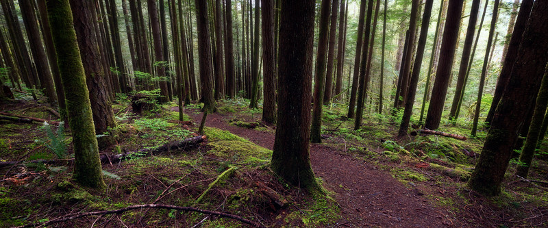 Gold Bar, Wallace Falls - Path through old growth forest in the mist