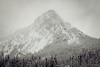 Snoqualmie Pass, PCT South - Guye Peak in a snowstorm with foreground forest