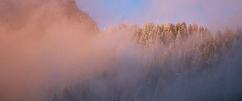 Snoqualmie Pass, Gold Creek Pond - Brilliant alpenglow on stand of snow covered trees in fog