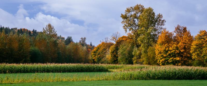 Duvall, Crescent Lake - Fall colors over a corn field