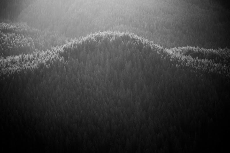 North Bend, Rattlesnake - Forested hill backlit and rimlit by sun, black and white