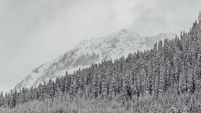 Snoqualmie Pass, PCT South - Upper Commonwealth Basin in a stormstorm with forest