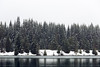 Snoqualmie Pass, Gold Creek Pond - A row of evergreen trees in a snowstorm along the pond's edge