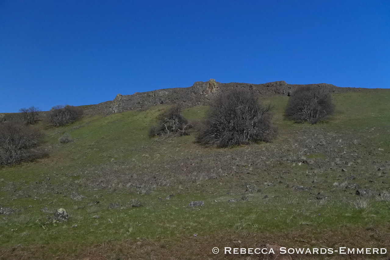 Beneath the rocky cliffs by the parking area - lots of wildflowers are coming out.