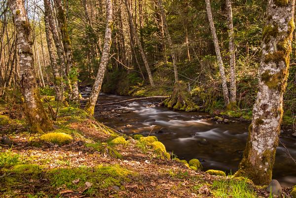 28 Miles of Creek