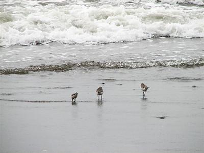 Birds at Kalaloch