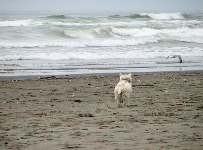 Islay running around