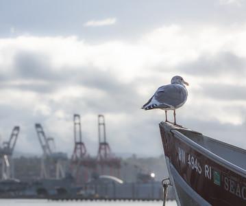 Cranes and Bird