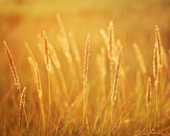 Klipsan Grass