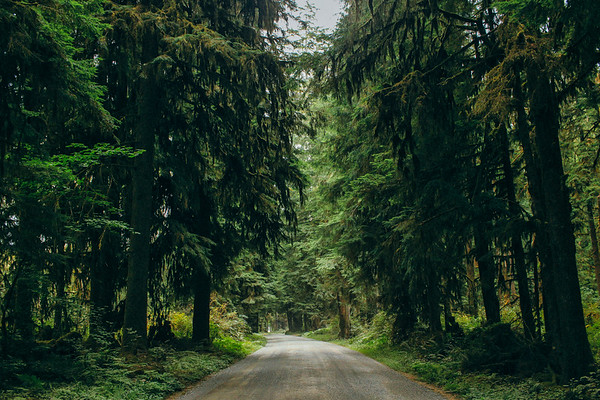 Road through the Quinault rainforest.